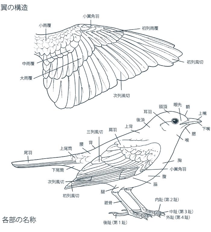 翼の構造 各部の名称